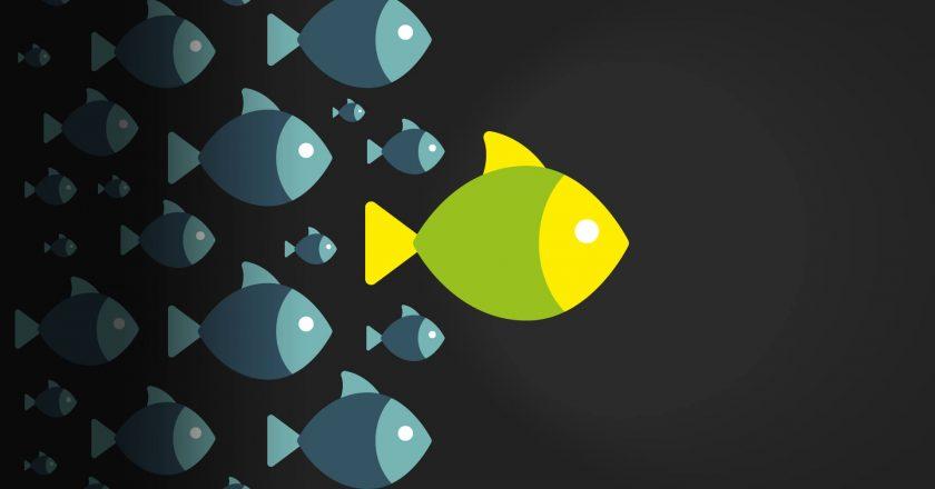 matter of design, Influencer Marketing, Social Media